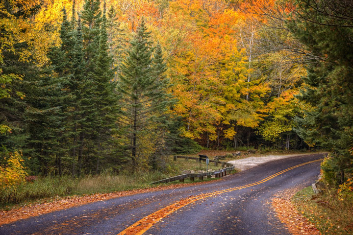 road through a Michigan forest in Autumn